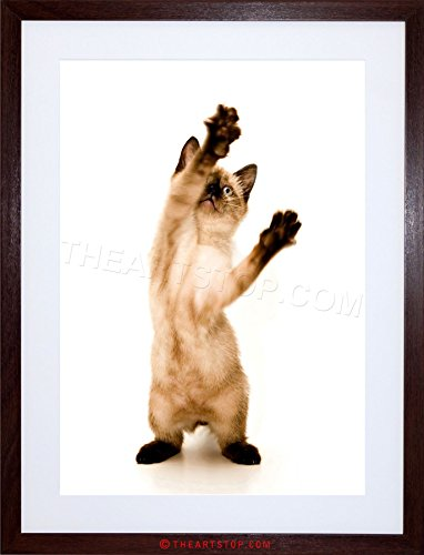 The Art Stop Photo Cute Siamese Kitten CAT Playing Standing Framed Print F97X6314