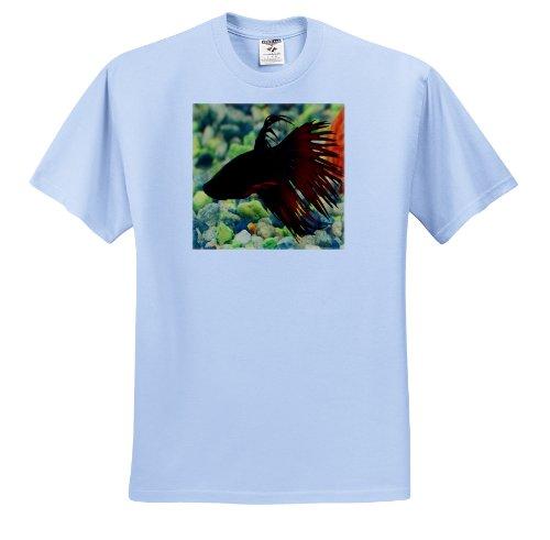 Rebecca Anne Grant Photography Fish - Betta Fish - T-Shirts - Adult Light-Blue-T-Shirt Medium (ts_14145_51) (Betta Fish T Shirt)