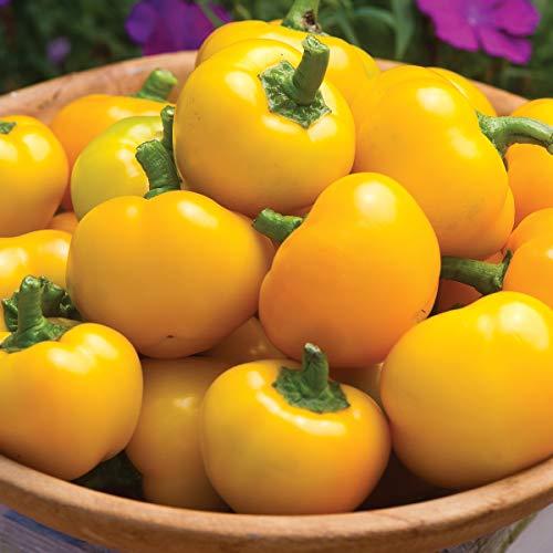 - Burpee Mini Tweety Hybrid Sweet Pepper Seeds 10 seeds