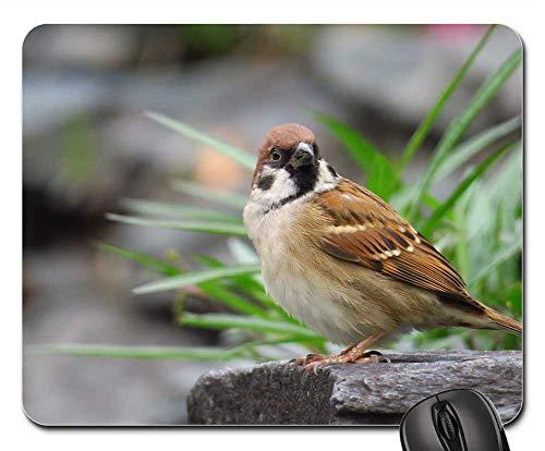 Mouse Pad - Palm Feather Bird Stone Sparrow Beak Eye Coffee ()