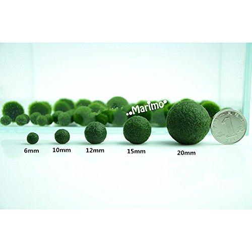 Japanese Marimo Moss Ball Aquatic Living Plant for Fish Aquarium Terrarium Supplies6mm