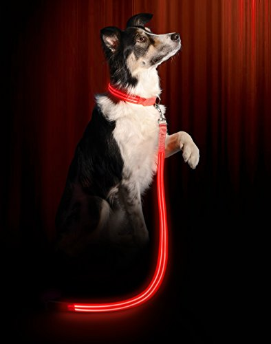Illumiseen LED Dog Leash - USB Rechargeable - Your Dog Will Be More Visible & Safe - 6 Colors (Red, Blue, Green, Pink, Orange & Yellow) - Perfect to Use ()