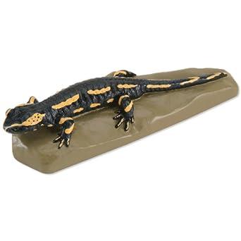 3B Scientific VN700 Fire Salamander (Salamandra salamandra)