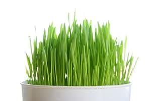 Todd S Seeds Cat Grass