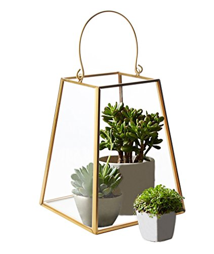 Artestia Clear Glass Geometric Terrarium for Succulent Plants in Copper Vase Decoration by Artestia