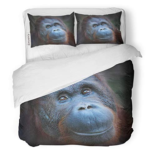 Semtomn Decor Duvet Cover Set King Size Animal Happy Smile of The Bornean Orangutan Pongo Pygmaeus 3 Piece Brushed Microfiber Fabric Print Bedding Set Cover