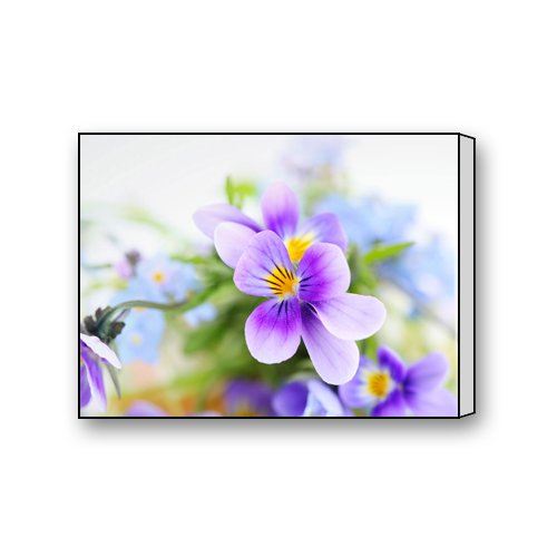 Colorful Beautiful Charming Fantasy Unique Art Cute Flower Blossom Pansy Viola Tricolor Decorative Painting Modern Wall Art Home Decor Canvas Print 16