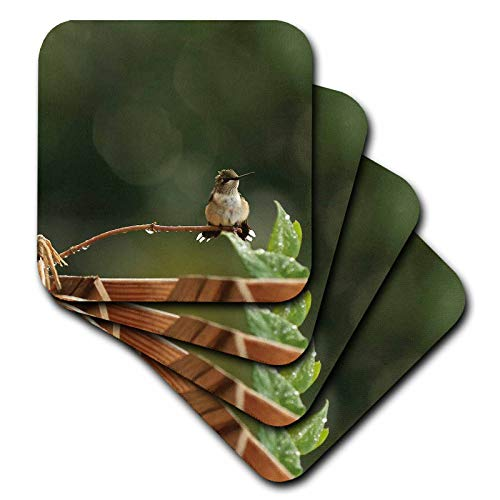 (3dRose Stamp City - birds - Photo of an adorabe female ruby throated hummingbird with a mohawk. - set of 8 Ceramic Tile Coasters (cst_302852_4))