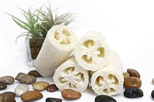 Natural Exfoliating Loofah Sponges | Natural Bath and Body Sponge, 4 Pack