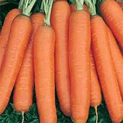 Amsterdam 2 Carrot Seeds (50 Seeds) : Garden & Outdoor