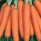 Amsterdam 2 Carrot Seeds (50 Seeds)