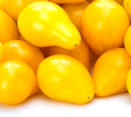 Tomato Yellow Pear Seeds by Zellajake Many Sizes Heirloom Tiny Cherry Rare #216 by 6SHTN (Image #2)