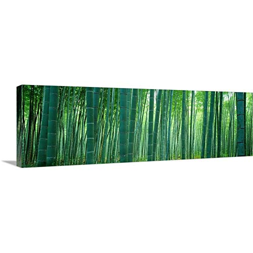 Canvas on Demand Premium Thick-Wrap Canvas Wall Art Print entitled Bamboo Forest, Sagano, Kyoto, Japan 60