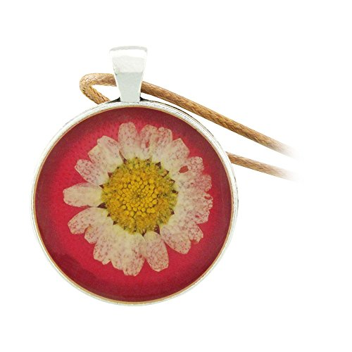 FM FM42 Pressed Dried Daisy Flower on Red Background Round Pendant Necklace FN2044