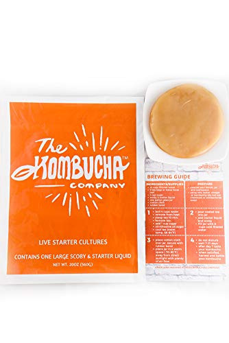 Large Kombucha Brewing SCOBY with 16oz (2 Cups!) Strong LIVE Starter TEA and LIVE Cultures by -The Kombucha Company (Makes 1 Gallon)