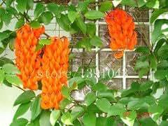20 PC en peligro Semillas Jade Vine rara flor flores azules semillas de flores en maceta bonsai de glicina al patio de la casa plantador de jardín