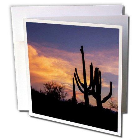 "3dRose Arizona, Tucson, Saguaro National Park West, Silhouette Of Cacti - Greeting Card, 6"" x 6"", Single (gc_250538_5)"