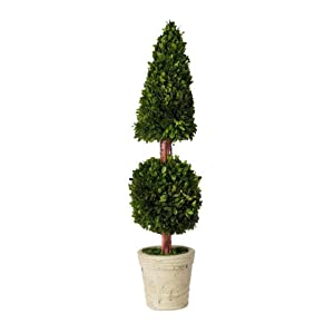 Preserved Green Cone and Ball Topiary 24