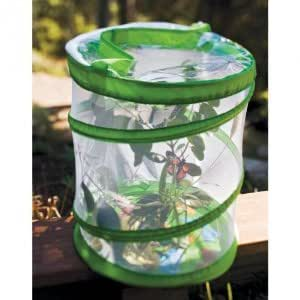 Amazon Com Insect Lore Butterfly Cage Only No