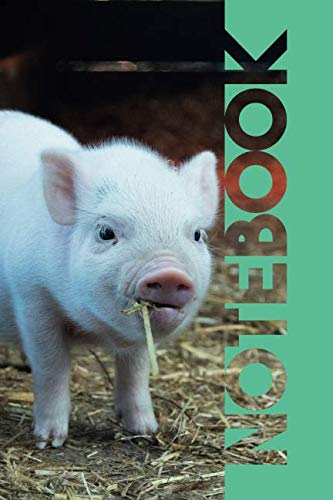 Notebook: Cute Piglet Petite Composition Book for Researching Mini Pigs For Sale Near Me (Vietnamese Pot Bellied Pig Pet For Sale)