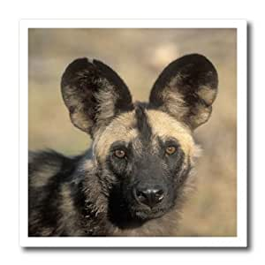 ht_71540_3 Danita Delimont - Dogs - Botswana, Chobe NP, African Wild Dog, Savuti Marsh-AF05 PSO0074 - Paul Souders - Iron on Heat Transfers - 10x10 Iron on Heat Transfer for White Material
