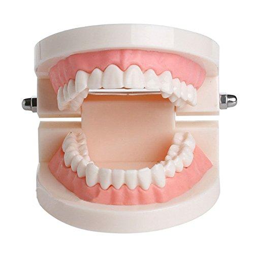 Wildeal Estándar Diente enseñanza Gigante Dental Dentista Dientes Niño kidtraining Médico Modelo pedagógico: Amazon.es: Hogar