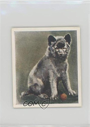 The Keeshond (Trading Card) 1936 Godfrey Phillips Our Puppies - Tobacco [Base] #14 (Phillips Card Tobacco)