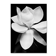 Trademark Fine Art Magnolia Canvas Wall Art by Michael Harrison, 24 by 32-Inch