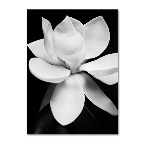 Zen Magnolia - Magnolia  by Michael Harrison, 35 by 47-Inch Canvas Wall Art