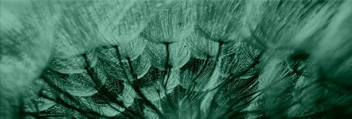 Startonight Canvas Wall Art Dandelion, Flowers USA Design for Home Decor, Dual View Surprise Artwork Modern Framed Ready to Hang Wall Art 15.75 X 47.2 Inch 100% Original Art Painting! by Startonight