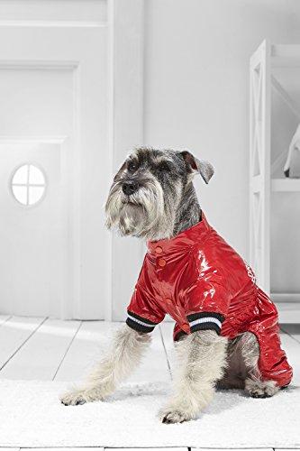 [Small Dog Snow Jumpsuit For Miniature Schnauzer Dachshund Havanese Bichon Frise (Medium Size, red, black,] (Mini Dachshund Halloween Costumes)