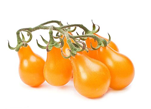 Yellow Pear Tomato 50+Seeds-Tiny Small Sweet Yellow Cherry Tomato Organic Non-GMO Fruit Vegetable Garden Seeds for Planting Tasty Great for Salads Juice