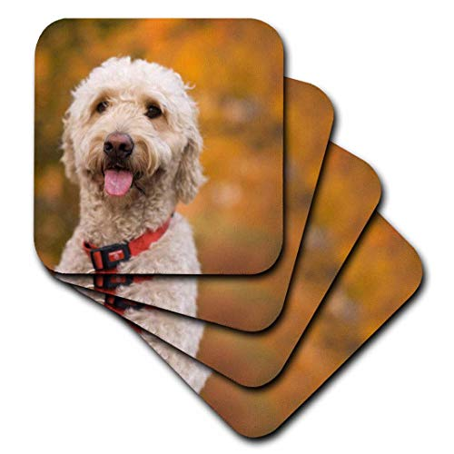 3dRose Massachusetts, Reading, Labradoodle Dog-Us22 Jen0072-Jim Engel Brecht-Soft Coasters, Set of 4 (CST_90840_1) (Reading Massachusetts)
