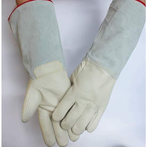Liquido Calda Antigelo e Confezioni a freddo di Antigelo Protezione Azoto Bianco Ghiaccio temperatura guanti Carbonico Stoccaggio vacchetta bassa pelle Sciarpa Beanie 11xav