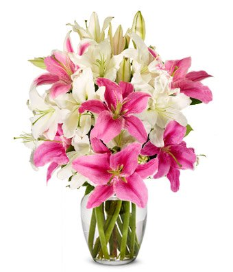 Amazon Flowers Stunning Pink And White Lilies Free Vase