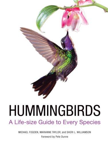 Hummingbirds Animals - Hummingbirds: A Guide to Every Species