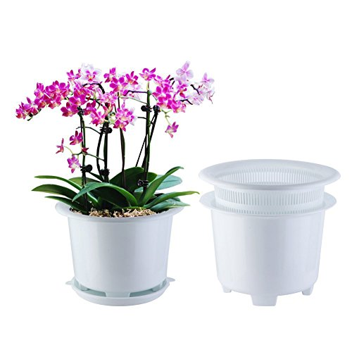 orchid pot large 8 inch buyer's guide