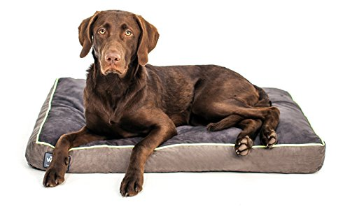 """Better World Pets 5-Inch Thick Waterproof Orthopedic Memory Foam Dog Bed with 180 GSM Removable Washable Cover, Medium (36"""" x 24"""" x 5"""") (Dogs 20-60 lbs.), Grey with Rave Green trim"""