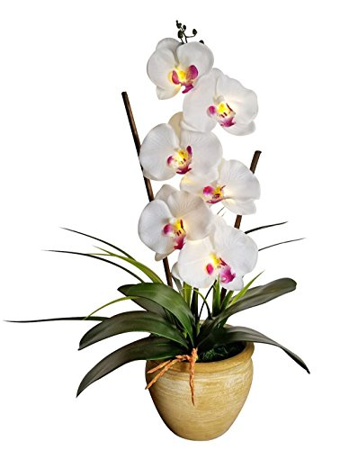 Phalaenopsis Orchid Flower (Homeseasons LED Pre Lit Lighted Single Stem Phalaenopsis Silk Orchid Arrangement-Battery Operated Lighted Artificial Orchid Plant(White))
