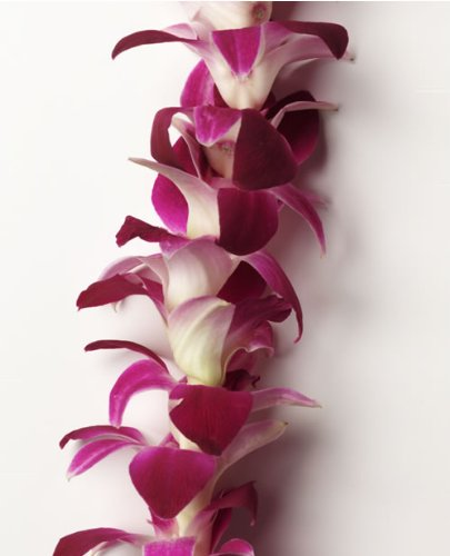 Hawaiian Leis Bulk - Box of Fresh Flower - Orchid Leis