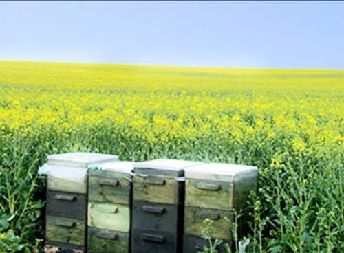 はちみつ 生はちみつ ハニーパシフィカ アメリカ オレンジハニー 450g アメリカ州 カルフォルニア産 高級蜂蜜 美容 蜂蜜アンチエイジング