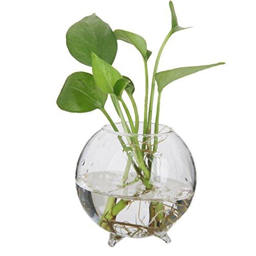 vase boule en verre transparent pour plante fleur. Black Bedroom Furniture Sets. Home Design Ideas