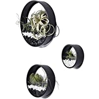 Pack of 3 Black Wall Round Wall Planters, Wall Metal Vase, Air Plant Holders, Round Fairy Garden, Hanging Wall Planter
