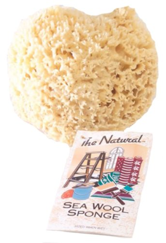 The Natural Sea Sponge, 6 to 7-Inch, Wool by The Natural
