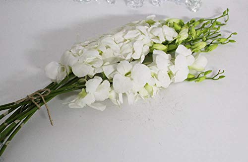 - Athena's Garden Live White Cut Orchids by The Box of 7 Bunches,