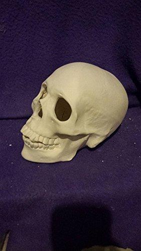 Creative Kreations Ceramics 7 Realistic Skull
