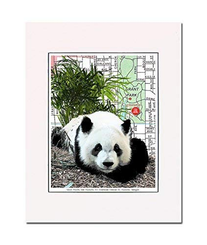 Panda at the Atlanta Zoo, Atlanta, Georgia, art print. Enhance your home or office. Gallery quality. Matted and ready-to-frame.