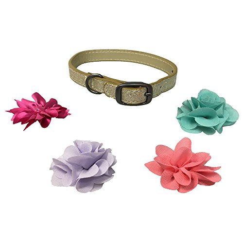 Glam Collar (Bow & Arrow Pet Glitter Nylon Dog Collar With 4 Pack of Flower Accessories, Large, Gold)