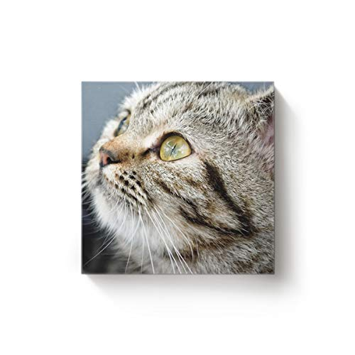 EZON-CH 12 x 12 Inch Canvas Wall Art Square Oil Painting Office Home Modern Decor,Funny 3D Tabby Cat Face Animal Pattern Canvas Artworks,Stretched by Wooden Frame,Ready to Hang -