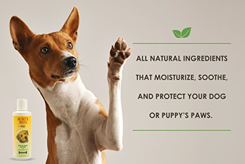 Best Natural Sunscreen For Dogs